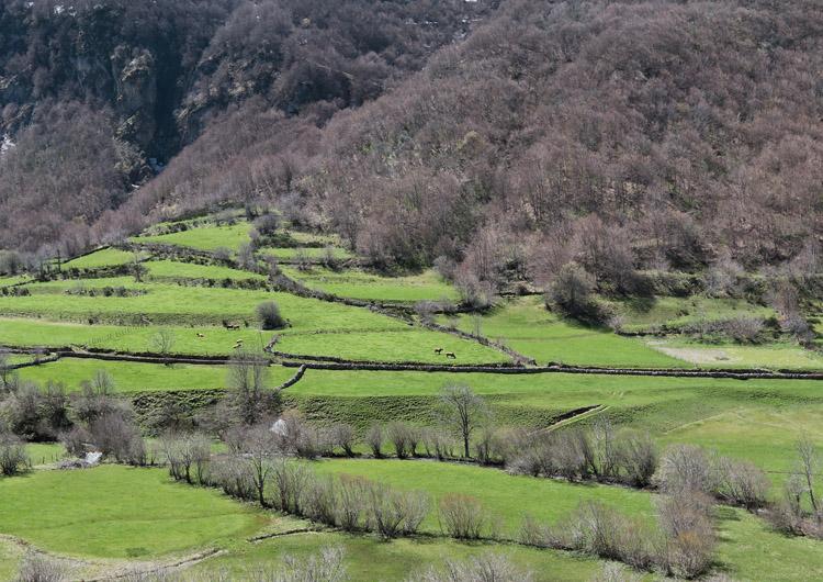 asturiasverde